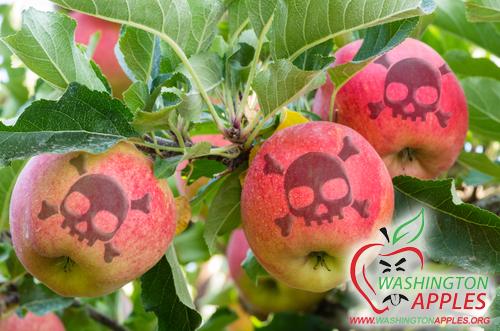 gross-washington-apples